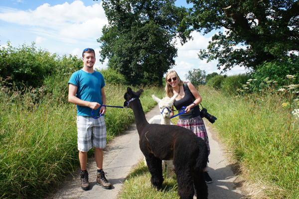 Alpaca Walks